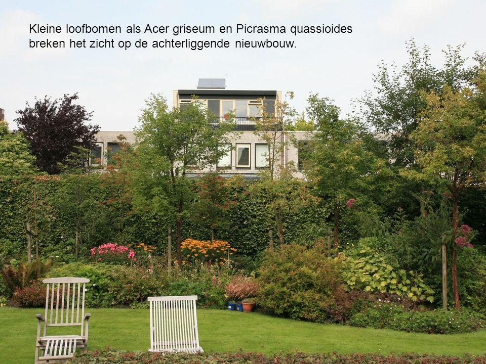 Kleine loofbomen als Acer griseum en Picrasma quassioides breken het zicht op de achterliggende nieuwbouw.
