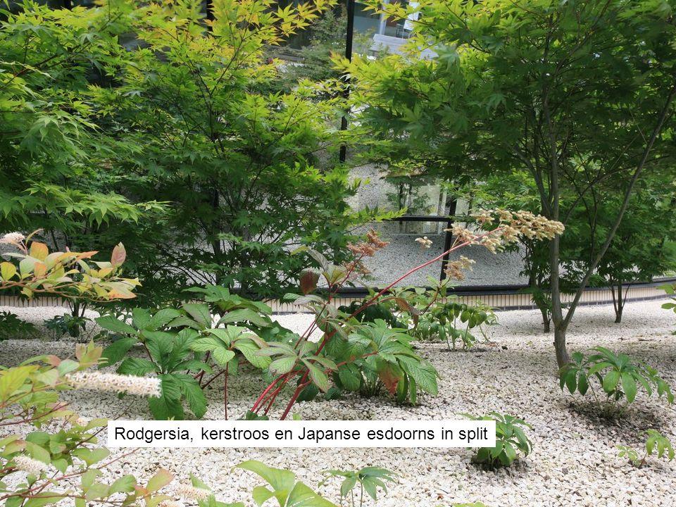 De gebogen gevel van het personeelsrestaurant reflecteert de tuin