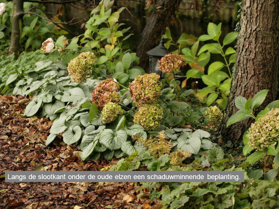 Langs de slootkant onder de oude elzen een schaduwminnende beplanting.