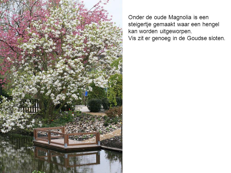 Onder de oude Magnolia is een steigertje gemaakt waar een hengel kan worden uitgeworpen. Vis zit er genoeg in de Goudse sloten.