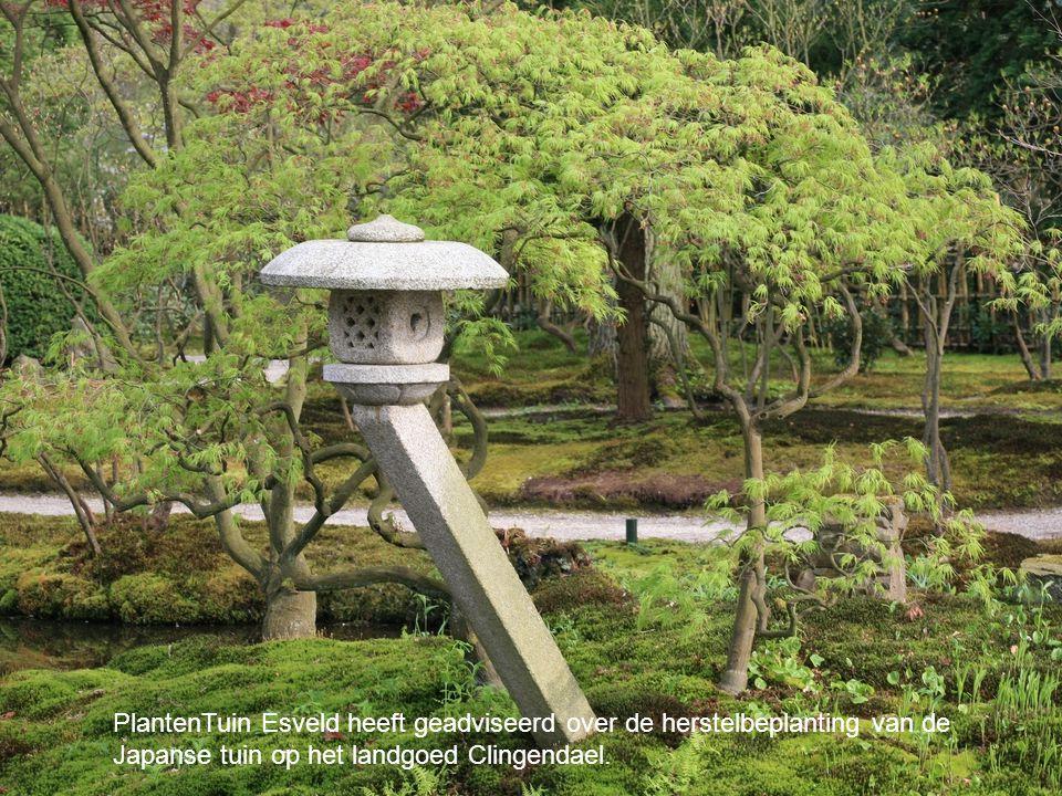 PlantenTuin Esveld heeft geadviseerd over de herstelbeplanting van de Japanse tuin op het landgoed Clingendael.