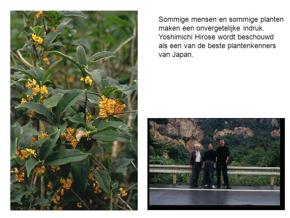 Sommige mensen en sommige planten maken een onvergetelijke indruk.