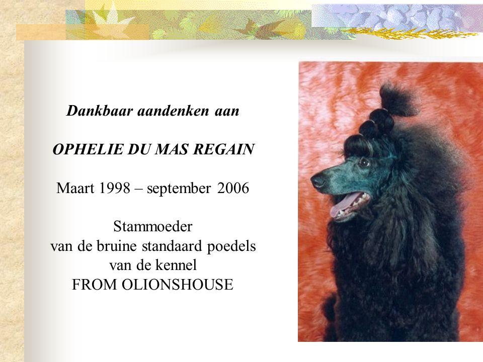 Dankbaar aandenken aan OPHELIE DU MAS REGAIN Maart 1998 – september 2006 Stammoeder van de bruine standaard poedels van de kennel FROM OLIONSHOUSE