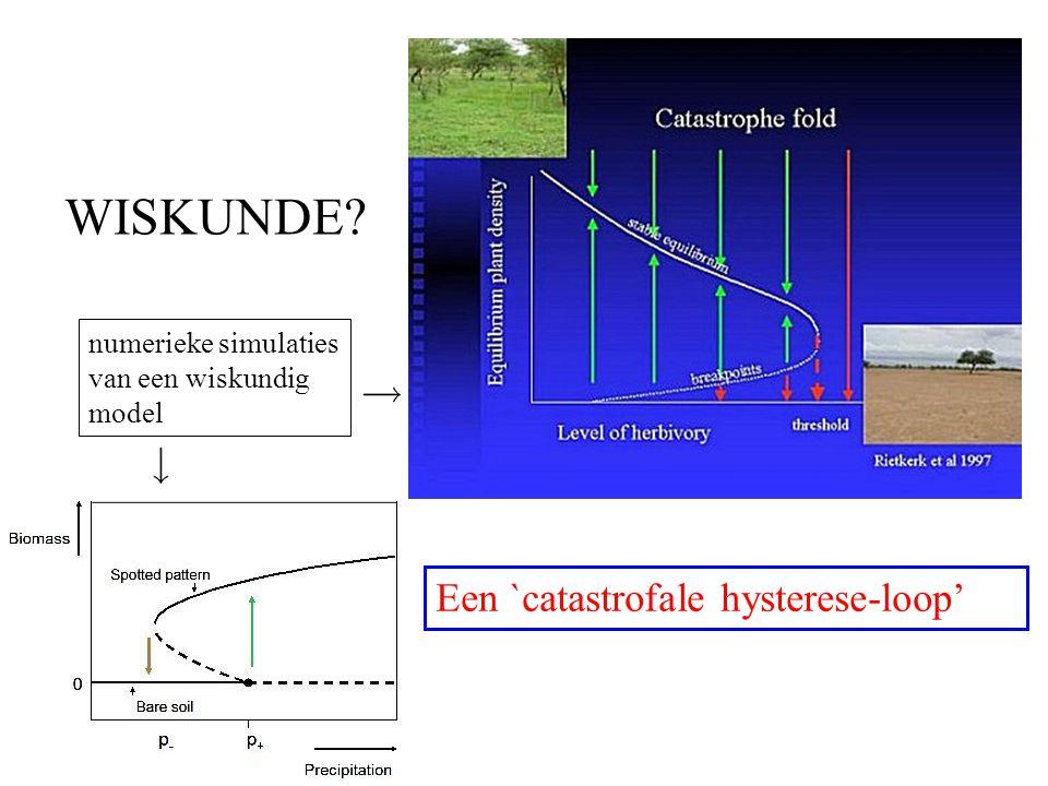 WISKUNDE? Een `catastrofale hysterese-loop' numerieke simulaties van een wiskundig model