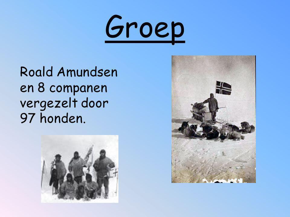 Groep Roald Amundsen en 8 companen vergezelt door 97 honden.