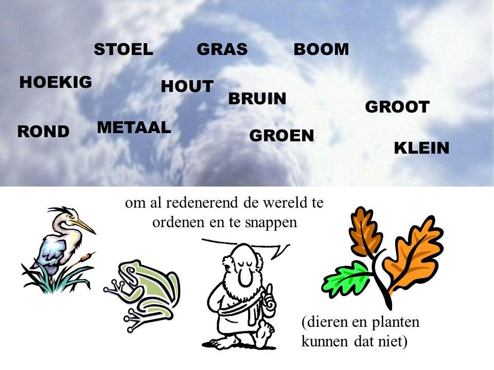 STOELBOOM HOUT METAAL GROEN BRUIN GROOT KLEIN HOEKIG ROND GRAS om al redenerend de wereld te ordenen en te snappen (dieren en planten kunnen dat niet)