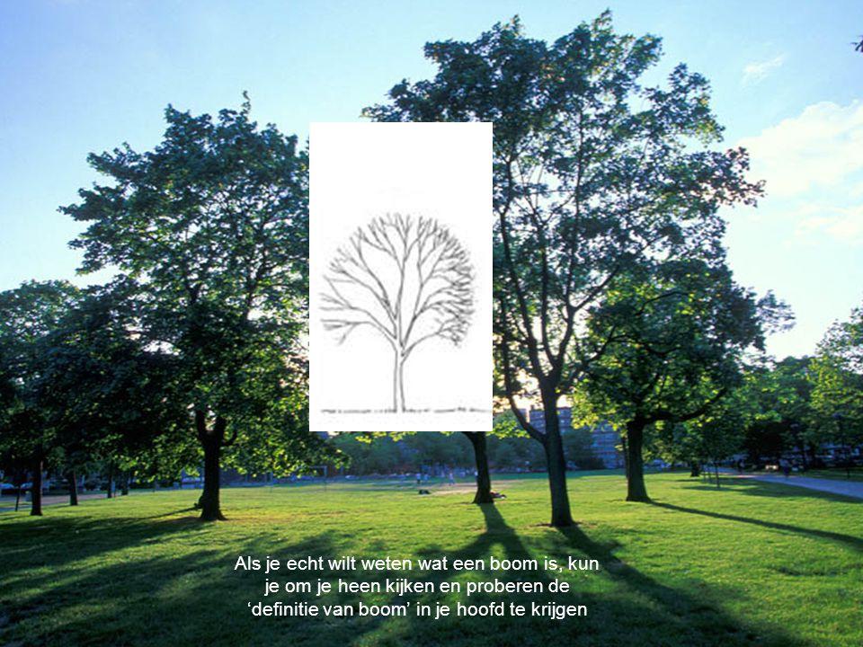 Als je echt wilt weten wat een boom is, kun je om je heen kijken en proberen de 'definitie van boom' in je hoofd te krijgen