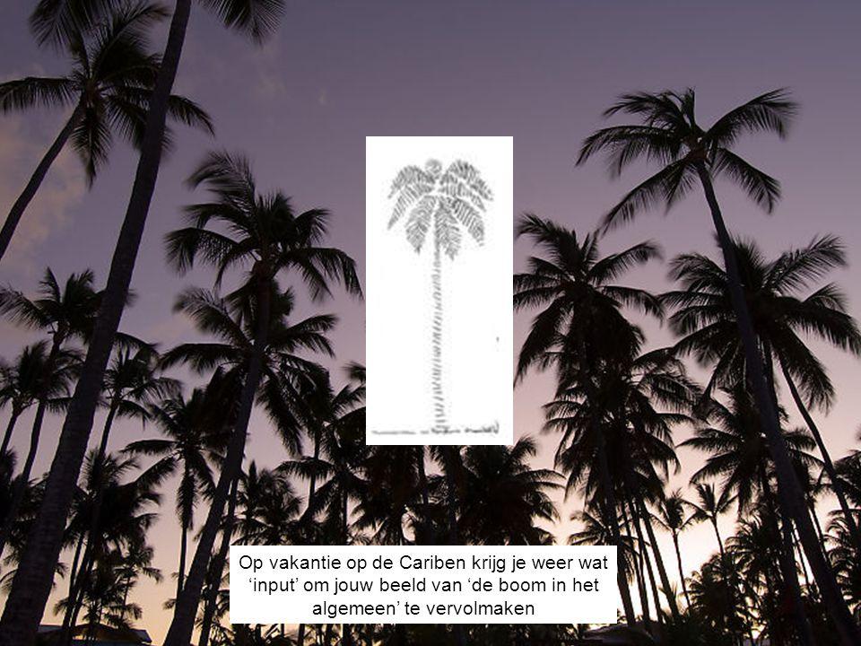 DE IDEALE BOOM Al met al krijg je in de loop der tijd een aardig idee van wat een boom is.