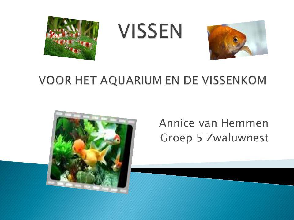 1.Aquarium, het woord 2. Soorten Vissen 3. Wat moet er op de bodem van de vissenkom 4.
