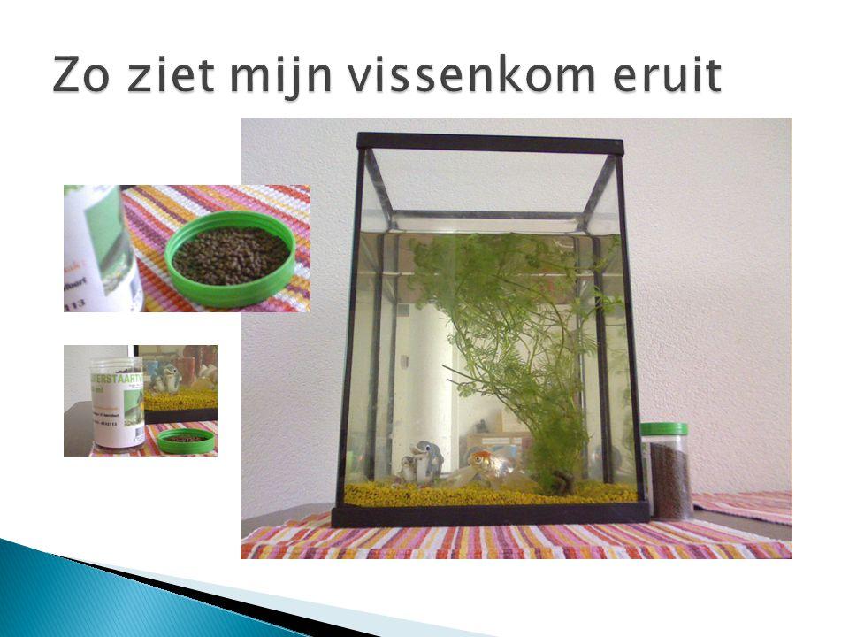 Mijn Vissen Waterplantjes Loodje Steentjes Beeldje