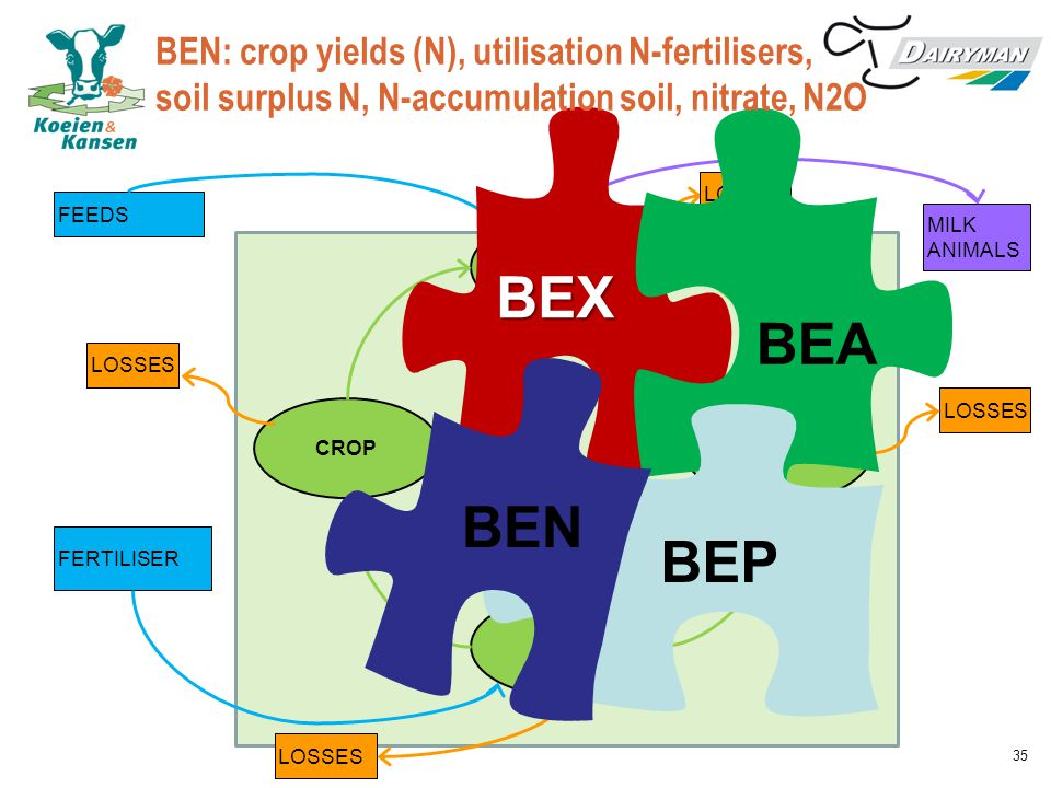 CATTLE MANURE CROP SOIL MILK ANIMALS FEEDS FERTILISER LOSSES BEX BEA BEN: crop yields (N), utilisation N-fertilisers, soil surplus N, N-accumulation soil, nitrate, N2O BEP BEN 35