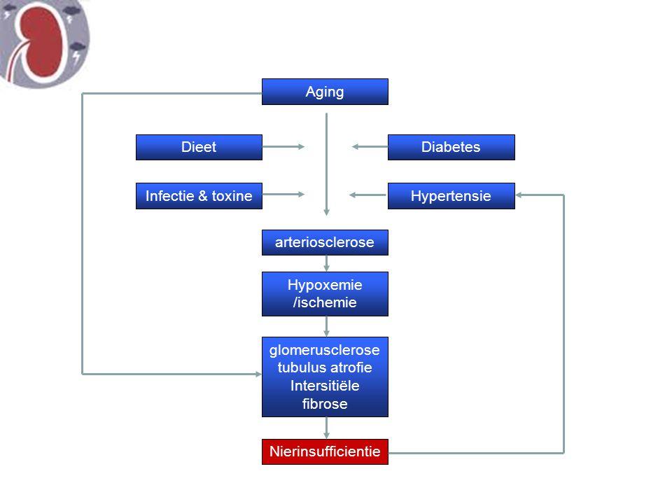 Aging Diabetes Hypertensie Dieet Infectie & toxine arteriosclerose Hypoxemie /ischemie glomerusclerose tubulus atrofie Intersitiële fibrose Nierinsuff