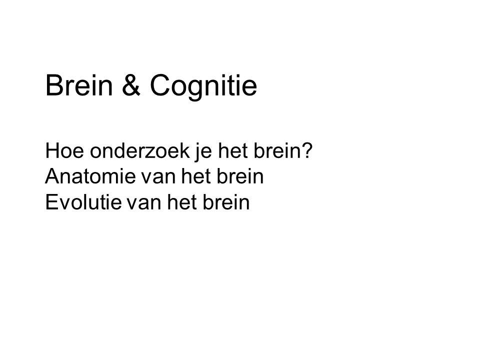 Brein & Cognitie Hoe onderzoek je het brein? Anatomie van het brein Evolutie van het brein