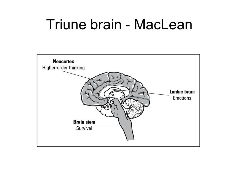 Triune brain - MacLean