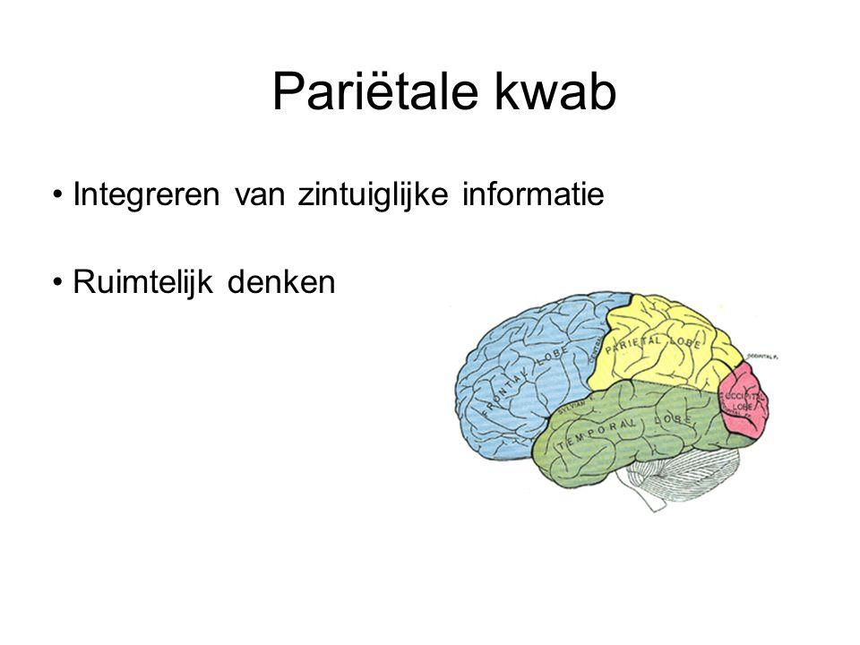 Pariëtale kwab Integreren van zintuiglijke informatie Ruimtelijk denken