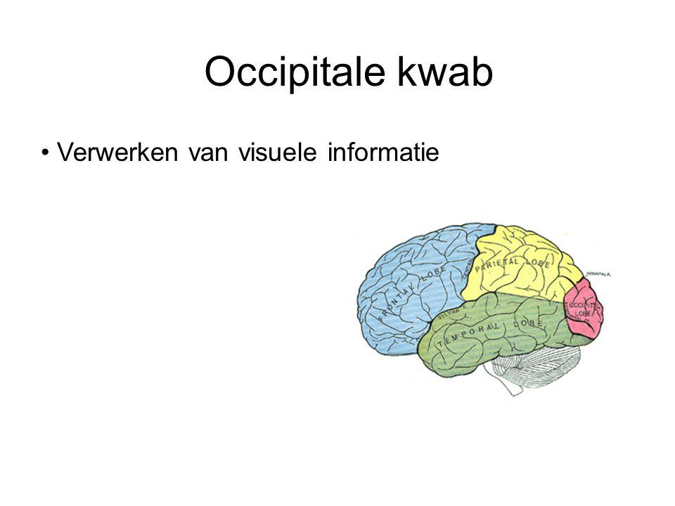 Occipitale kwab Verwerken van visuele informatie