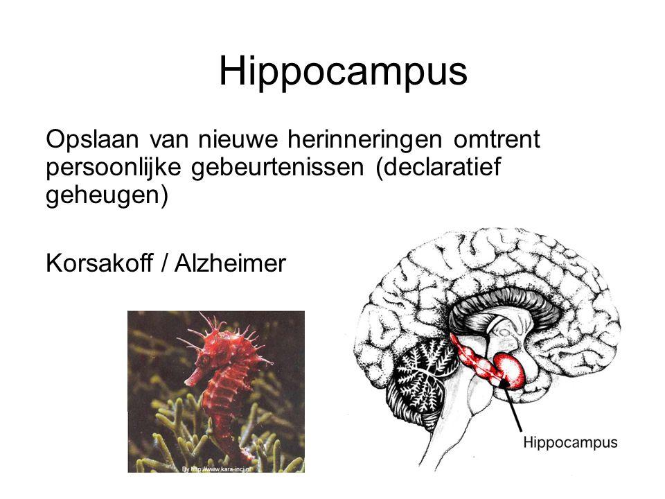 Hippocampus Opslaan van nieuwe herinneringen omtrent persoonlijke gebeurtenissen (declaratief geheugen) Korsakoff / Alzheimer