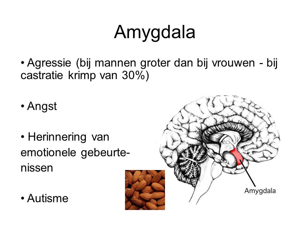 Amygdala Agressie (bij mannen groter dan bij vrouwen - bij castratie krimp van 30%) Angst Herinnering van emotionele gebeurte- nissen Autisme