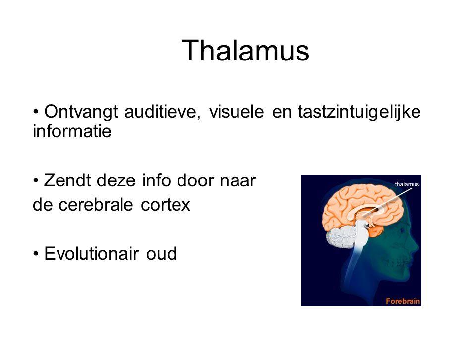 Thalamus Ontvangt auditieve, visuele en tastzintuigelijke informatie Zendt deze info door naar de cerebrale cortex Evolutionair oud