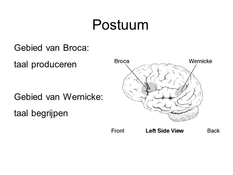 Postuum Gebied van Broca: taal produceren Gebied van Wernicke: taal begrijpen