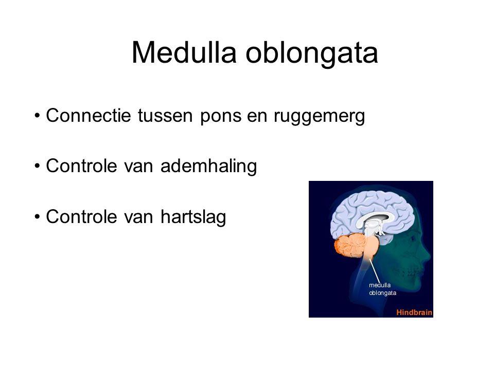 Medulla oblongata Connectie tussen pons en ruggemerg Controle van ademhaling Controle van hartslag