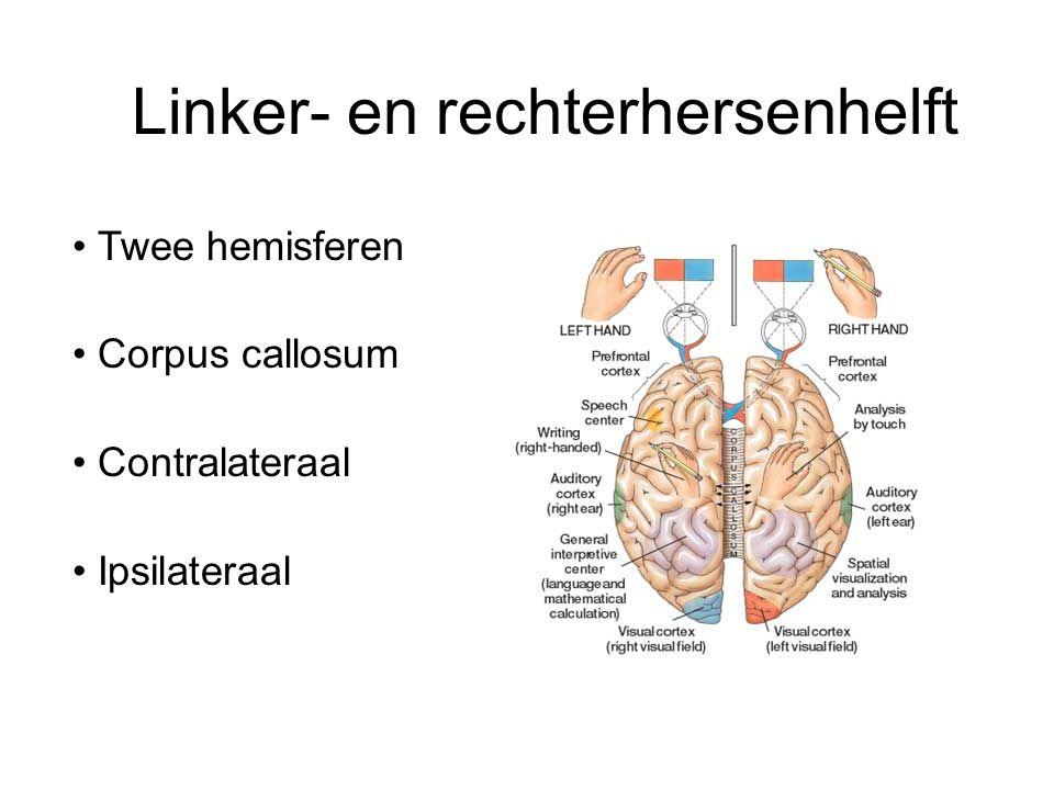 Linker- en rechterhersenhelft Twee hemisferen Corpus callosum Contralateraal Ipsilateraal