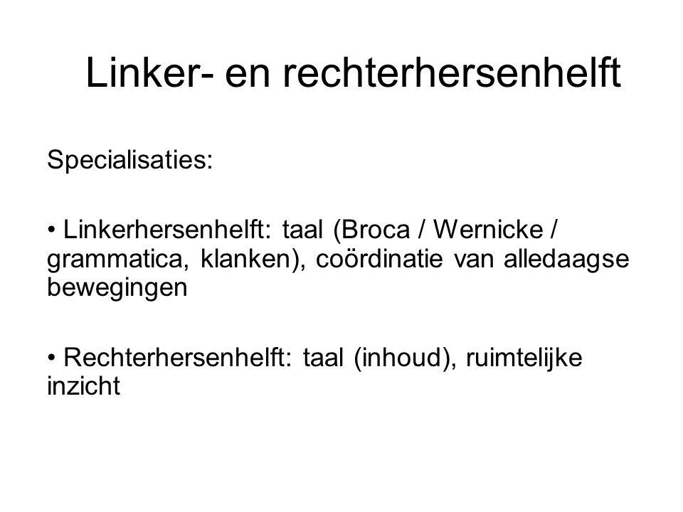 Linker- en rechterhersenhelft Specialisaties: Linkerhersenhelft: taal (Broca / Wernicke / grammatica, klanken), coördinatie van alledaagse bewegingen