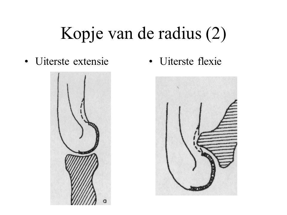 Kopje van de radius (2) Uiterste extensieUiterste flexie