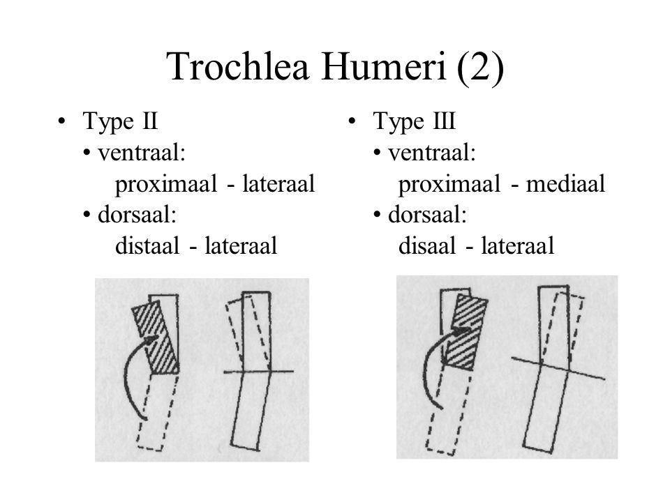 Trochlea Humeri (2) Type II ventraal: proximaal - lateraal dorsaal: distaal - lateraal Type III ventraal: proximaal - mediaal dorsaal: disaal - lateraal