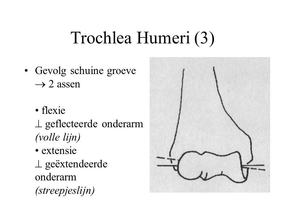 Trochlea Humeri (3) Gevolg schuine groeve  2 assen flexie  geflecteerde onderarm (volle lijn) extensie  geëxtendeerde onderarm (streepjeslijn)