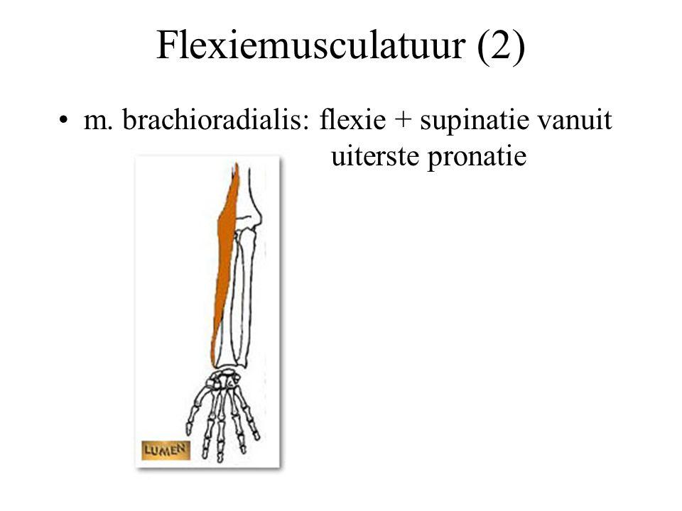 Flexiemusculatuur (2) m. brachioradialis: flexie + supinatie vanuit uiterste pronatie