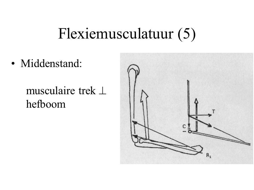 Flexiemusculatuur (5) Middenstand: musculaire trek  hefboom