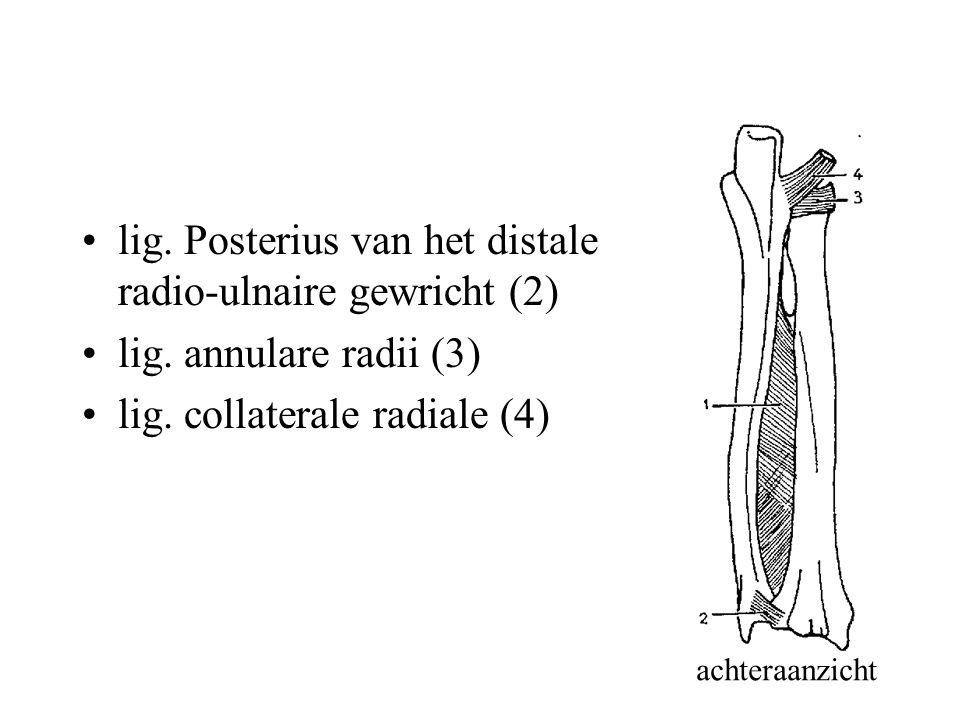 lig.Posterius van het distale radio-ulnaire gewricht (2) lig.