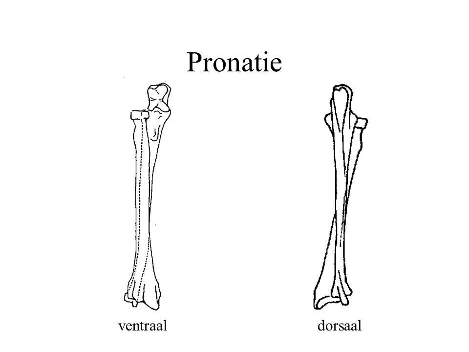 Pronatie ventraaldorsaal