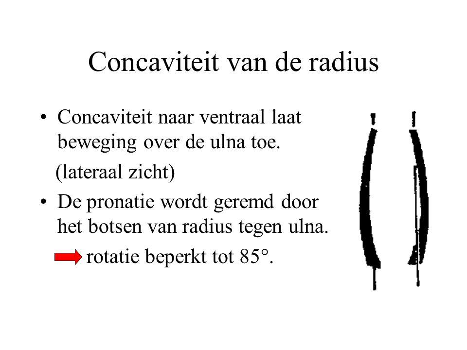 Concaviteit van de radius Concaviteit naar ventraal laat beweging over de ulna toe.