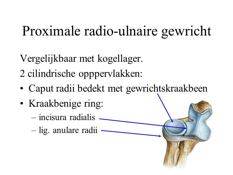 Proximale radio-ulnaire gewricht Vergelijkbaar met kogellager.