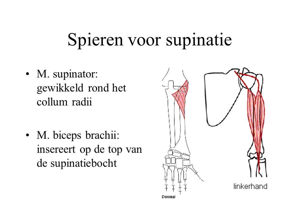 Spieren voor supinatie M.supinator: gewikkeld rond het collum radii M.