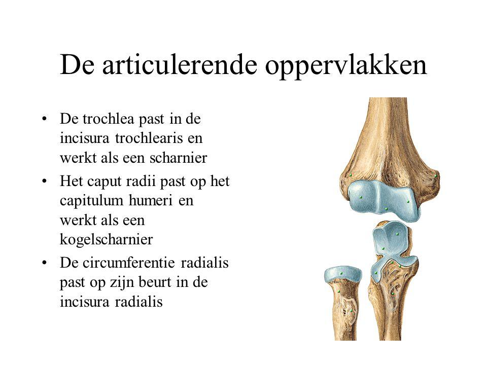 Verlamming Supinatie: zuiver door onderarm Pronatie: versterkt door abductie schouder Dus: verlamming van pronatiespieren kan nog gedeeltelijk gecompenseerd worden