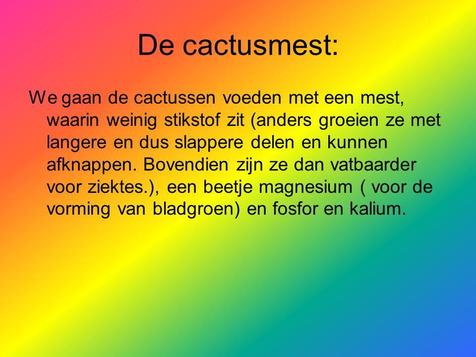 De cactusmest: We gaan de cactussen voeden met een mest, waarin weinig stikstof zit (anders groeien ze met langere en dus slappere delen en kunnen afknappen.