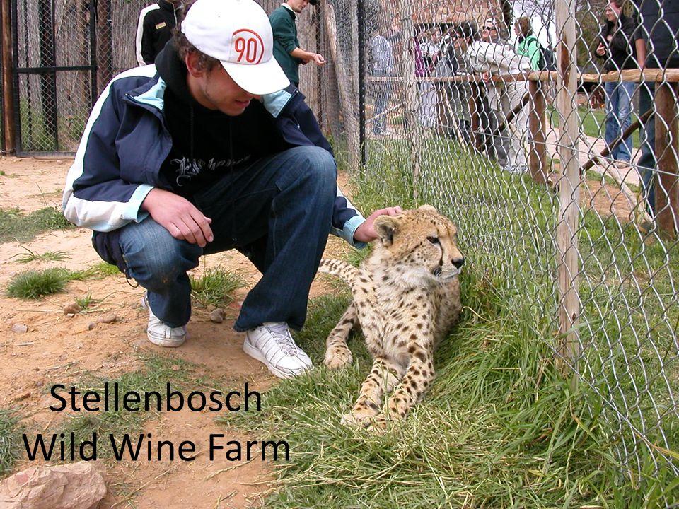 Stellenbosch Wild Wine Farm