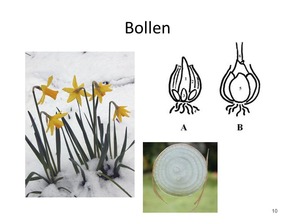 10 Bollen