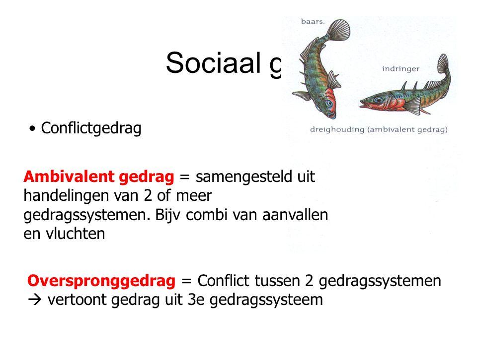 Sociaal gedrag Conflictgedrag Overspronggedrag = Conflict tussen 2 gedragssystemen  vertoont gedrag uit 3e gedragssysteem Ambivalent gedrag = samenge