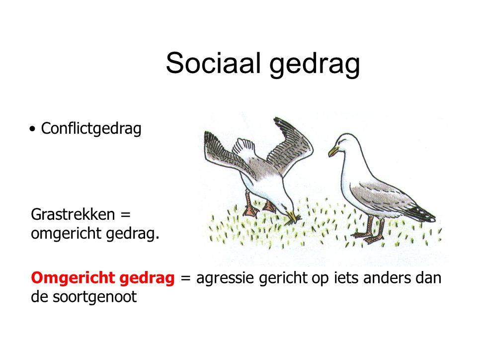 Sociaal gedrag Conflictgedrag Grastrekken = omgericht gedrag. Omgericht gedrag = agressie gericht op iets anders dan de soortgenoot