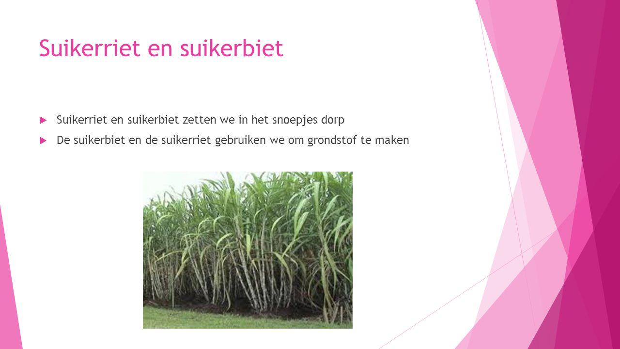 Suikerriet en suikerbiet  Suikerriet en suikerbiet zetten we in het snoepjes dorp  De suikerbiet en de suikerriet gebruiken we om grondstof te maken