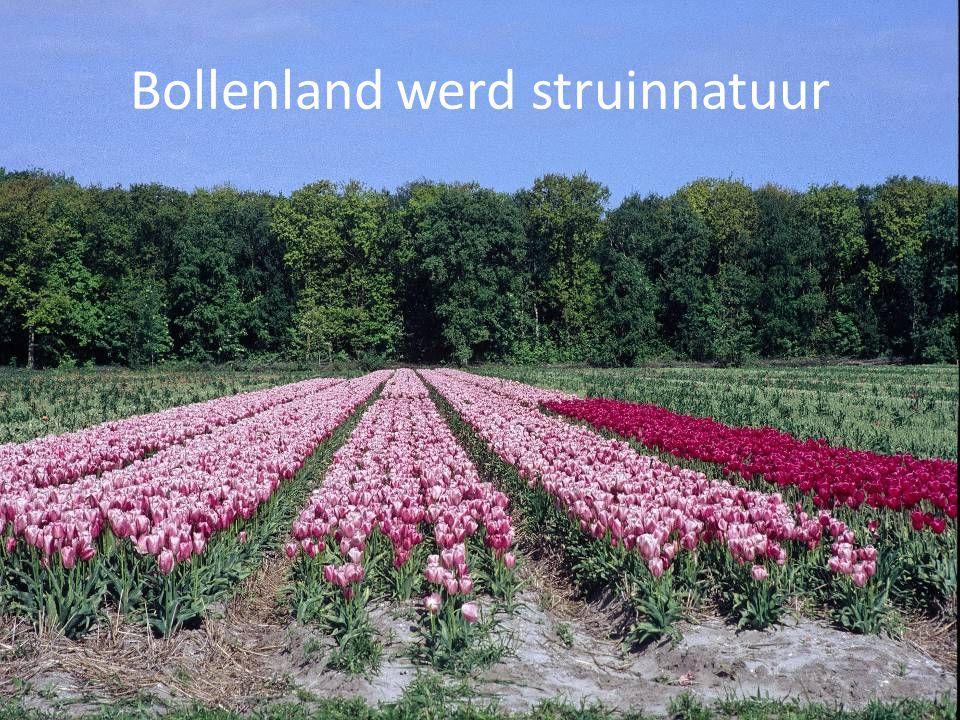 Bollenland werd struinnatuur