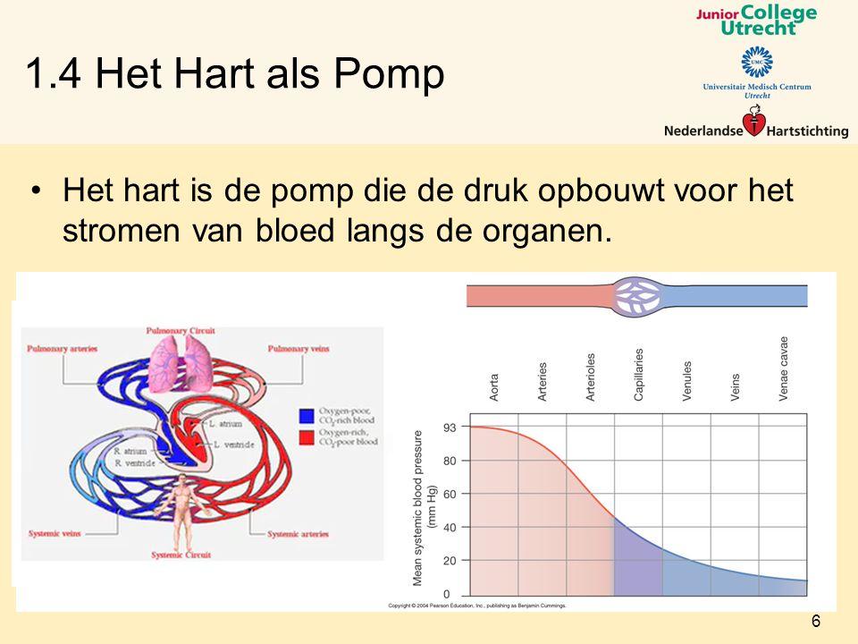 Het hart is de pomp die de druk opbouwt voor het stromen van bloed langs de organen.
