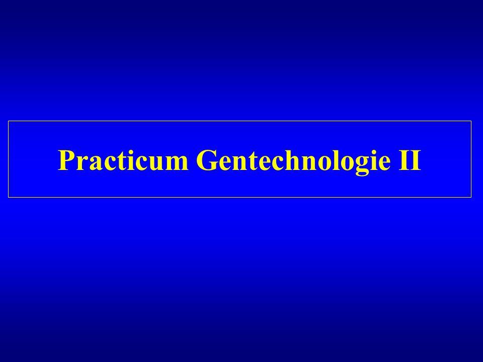 Practicum Gentechnologie II