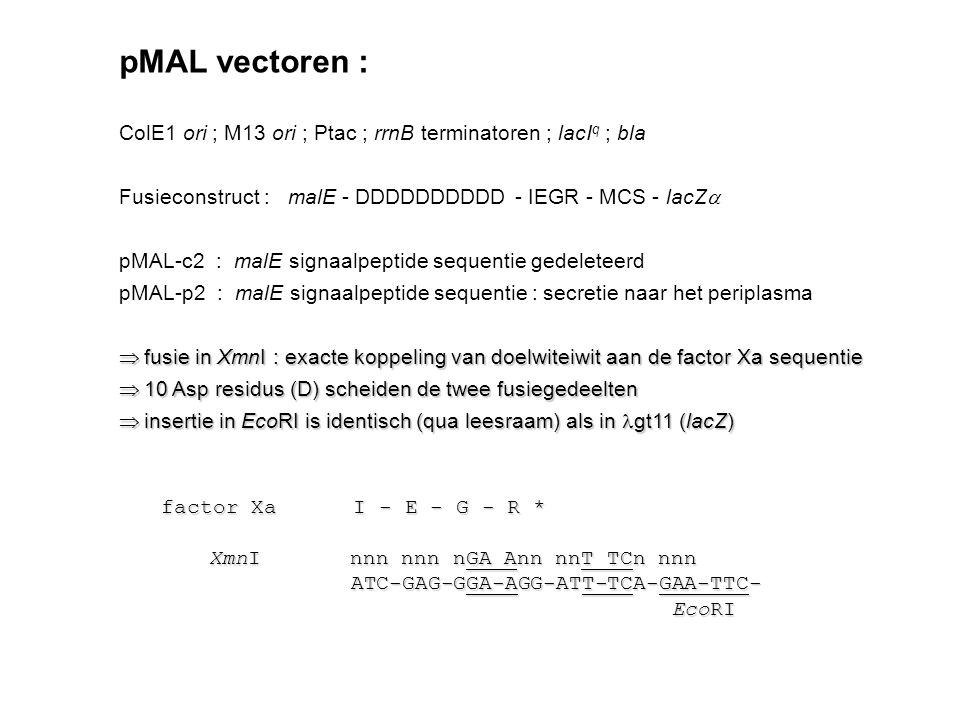 pMAL vectoren : ColE1 ori ; M13 ori ; Ptac ; rrnB terminatoren ; lacI q ; bla Fusieconstruct : malE - DDDDDDDDDD - IEGR - MCS - lacZ  pMAL-c2 : malE