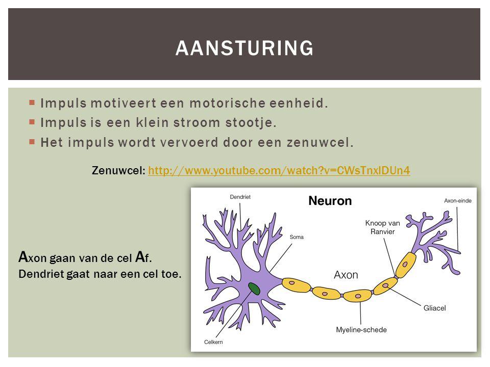  Impuls motiveert een motorische eenheid.  Impuls is een klein stroom stootje.  Het impuls wordt vervoerd door een zenuwcel. AANSTURING Zenuwcel: h