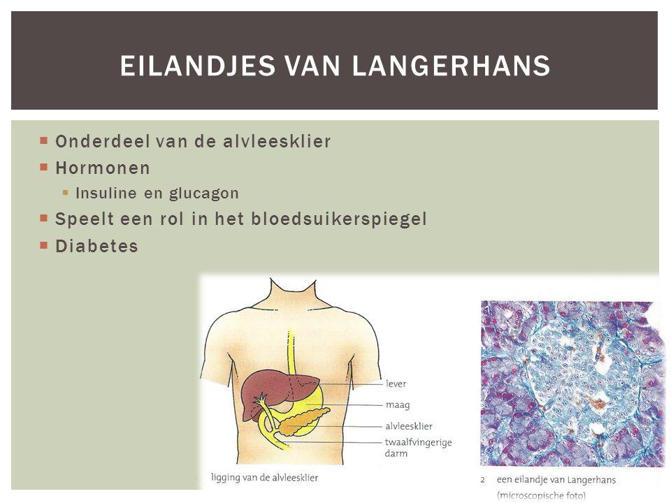  Onderdeel van de alvleesklier  Hormonen  Insuline en glucagon  Speelt een rol in het bloedsuikerspiegel  Diabetes EILANDJES VAN LANGERHANS